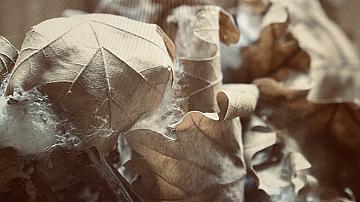 Един възрожденски занаят във Врачанско, жив и днес