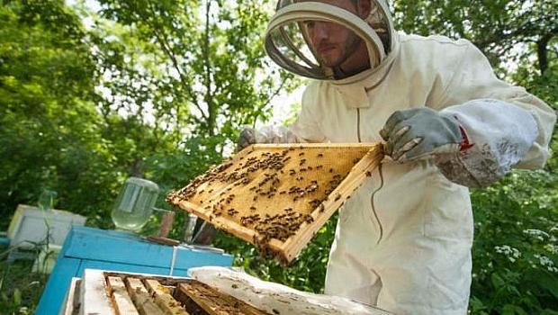 Защо няма болни пчелари от Ковид-19