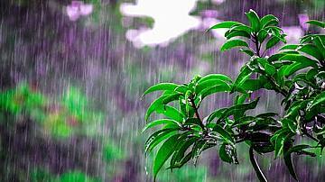 5 области с жълт код за интензивни валежи